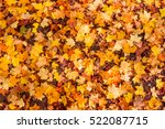 autumn leaves background. ... | Shutterstock . vector #522087715