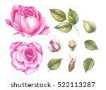 Stock photo vintage set of blooming roses watercolor botanical illustration of a rose postcard for 522113287