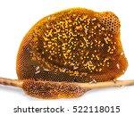 Bee On Honeycomb Isolated On...