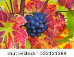 Blue Grapes Small Brush On The...