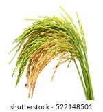 Green Spike Rice Isolated On...