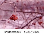 Three Red Berries On A Branch...