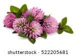 Clover Or Trefoil Flower...