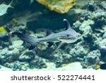 a whitetip reef shark ... | Shutterstock . vector #522274441