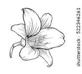 beautiful monochrome black and... | Shutterstock . vector #522346261