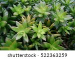 small plant africa | Shutterstock . vector #522363259