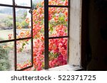 Red Bougainvillea Flowers Seen...