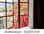 Red Bougainvillea Flowers Seen...