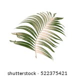 green leaves of palm tree on... | Shutterstock . vector #522375421