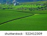 green tea hill in moc chau... | Shutterstock . vector #522412309