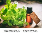 fresh basil twig and oil on... | Shutterstock . vector #522429631