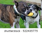 Two Dogs Playing Ball