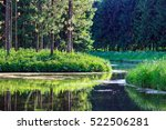 landscape with pond  old spruce ... | Shutterstock . vector #522506281