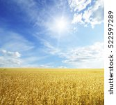 wheat field and blue sky with... | Shutterstock . vector #522597289