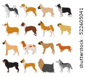set of purebred dogs. malamute... | Shutterstock .eps vector #522605041
