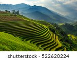 Terraced Rice Paddy Field...
