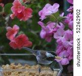 A Chickadee With A Beak Full O...