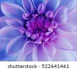iridescent dahlia flower blooms.... | Shutterstock . vector #522641461