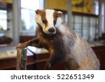 natural history museum badger | Shutterstock . vector #522651349