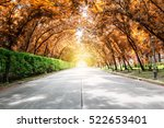Tree Tunnel With Sunlight...