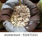 dried lupins | Shutterstock . vector #522671311