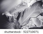 low key dark lighting nature... | Shutterstock . vector #522710071
