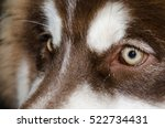 Beautiful Brown Dog Eyes...