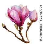 watercolor card with a magnolia ... | Shutterstock . vector #522787705