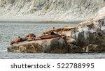 rookery steller sea lions.... | Shutterstock . vector #522788995