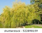 Green Willow Tree Near Lake ...