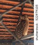 Small photo of Awake Owl