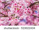 pink blossoms on the branch... | Shutterstock . vector #523022434