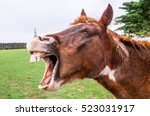 Funny Portrait Of Brown Horse...