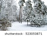 Snow Covered Trees In Winter...