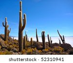 Cactus In The White Desert