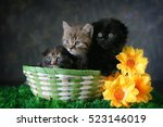Stock photo group of small striped kittens in an old basket 523146019