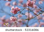 pink blossom against a blue sky - stock photo