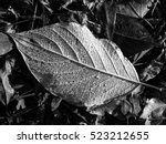 Leaf Texture  Detail  Black An...