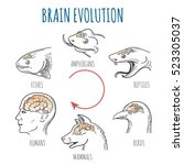 brain evolution from fishes to... | Shutterstock .eps vector #523305037