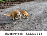 Two Young Ginger Cats On The...