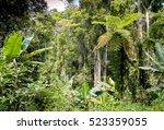 ranamafana rainforest  ...   Shutterstock . vector #523359055