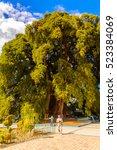 Small photo of The Tree of Tule (El Arbol de Tule), Montezuma cypress or ahuehuete in Nahuatl. UNESCO World Heritage