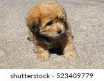 Stock photo happy dog 523409779