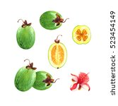 isolated watercolor feijoa on... | Shutterstock . vector #523454149