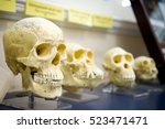 Four Skulls In A Raw Showing...