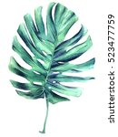realistic botanical... | Shutterstock . vector #523477759