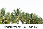 Coconut Palms Isolated On Whit...