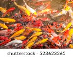 Among The Koi Fish Pond In The...