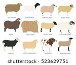 sheep breed isolated icon set.... | Shutterstock .eps vector #523629751