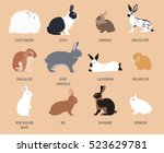 rabbit  lapin breed icon set.... | Shutterstock .eps vector #523629781